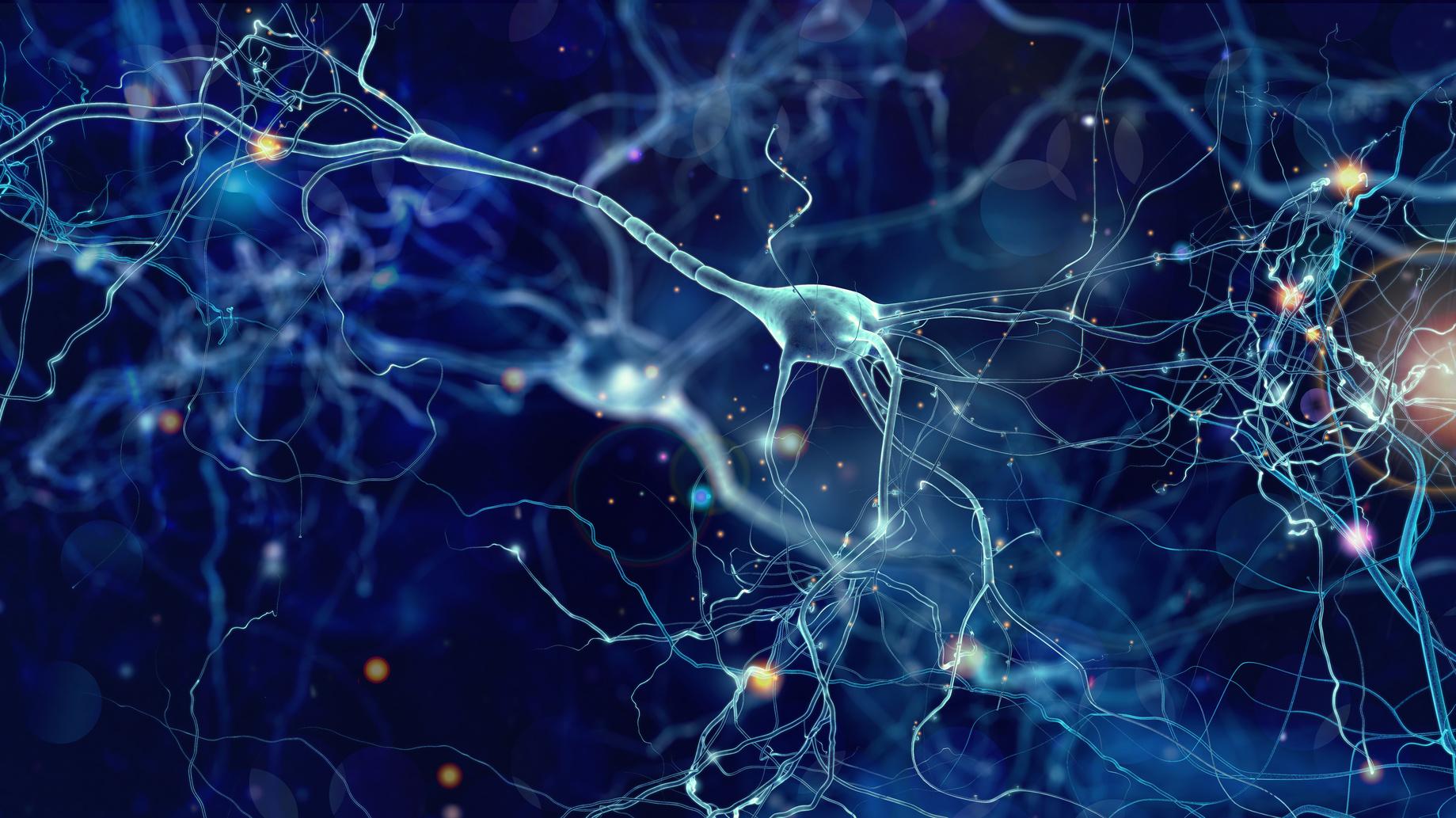 A Walk Through Our Nervous System