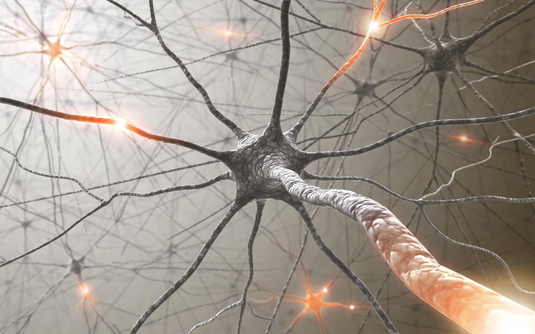 Damage to Brain Cells